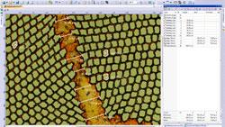 Work flow 2 : Measurements > Olympus BX51M > olympus microscopes, olympus microscope, uk, microscopy